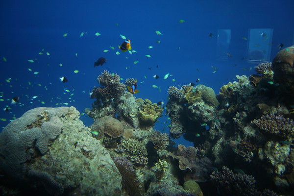 Marine life in the corals