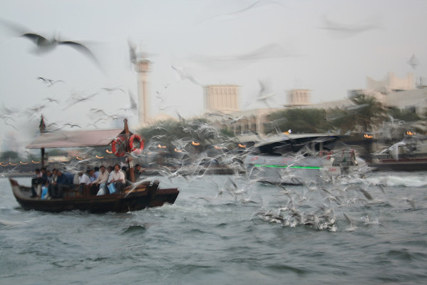 Birds at Dubai Creek